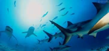 of sharks and syllabi 171 seacunderground