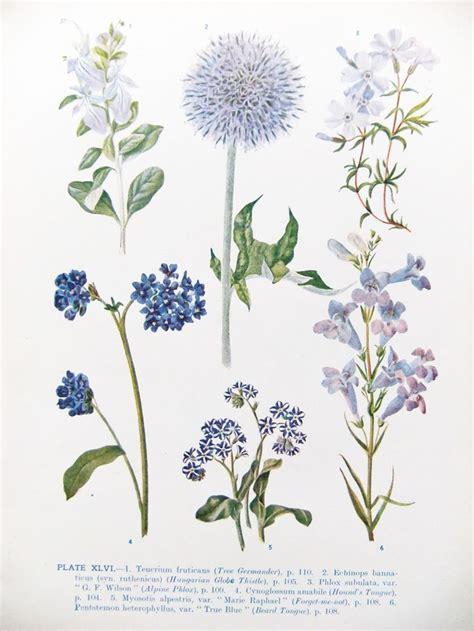Botanic Botanical 1000 Ideas About Vintage Botanical Illustration On