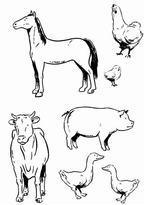 coloring pages of different animals farm animal coloring pages bestofcoloring com coloring