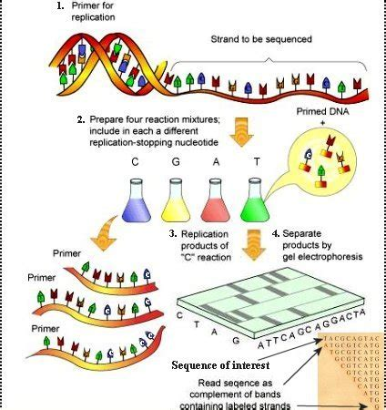 illumina sequence dna sequencing