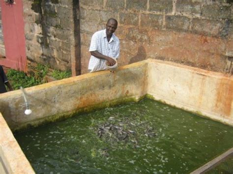 Sle Of A Business Plan On Catfish Farming | how to start snail farming business in nigeria 2015 home