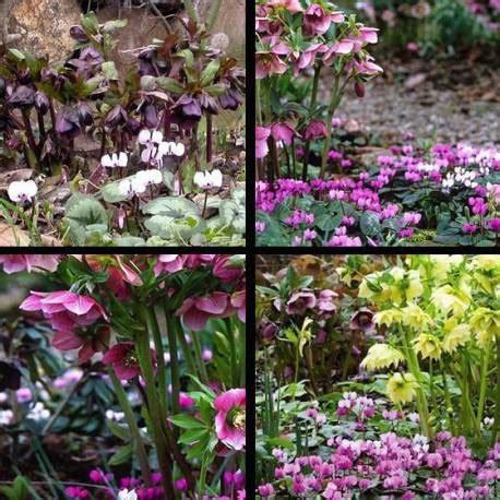 fiori invernali in vaso fiori invernali da esterno vivaio un quadrato di