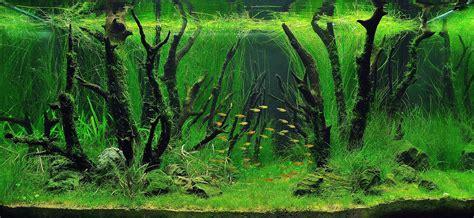 worlds  aquariums aquascapes  natural
