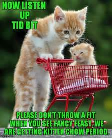 Cute Kitten Meme - best 25 cute kitten meme ideas on pinterest funny
