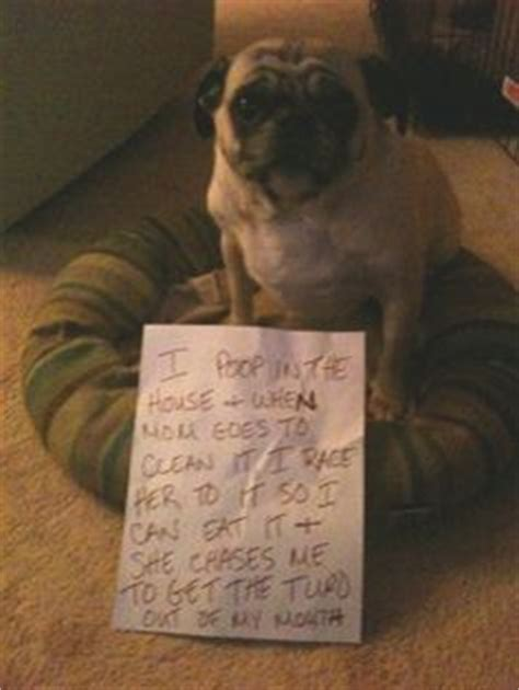 new dog pooping in house 1000 images about shamed dogs on pinterest dog shaming dogs and pets