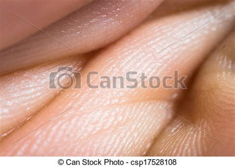 human skin macro picture stock photo 169 jugulator 25119063 stock photography of up human skin macro epidermis texture csp17528108 search stock