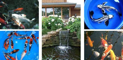 Sunland Water Gardens by Sunlandwatergardens Pond Supplies Pond Plants