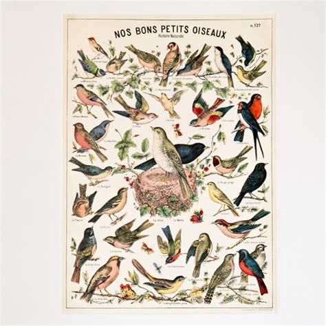 Little Kitchen Design Affiche Oiseaux R 233 Tro Vintage