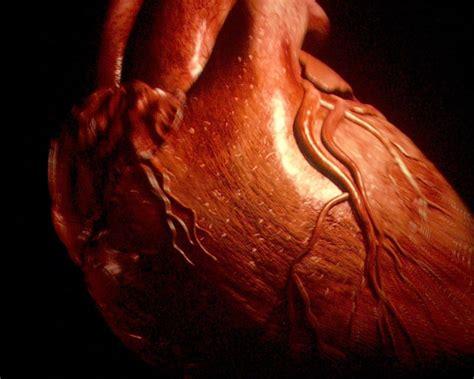 imagenes reales corazon humano imagenes de corazon humano imagui