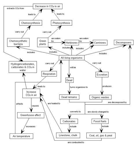 flow diagram of carbon cycle oxygen cycle flow chart