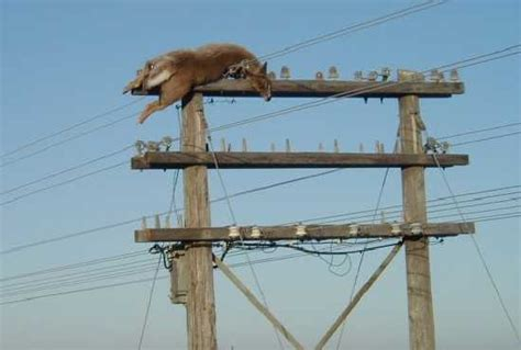 u boat jumping wire deer on power pole ecn electrical forums