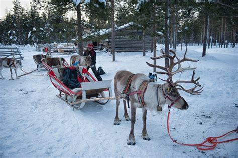 boat driving license finland officially licensed to drive a reindeer sled a pair of