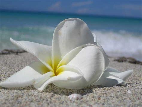 come curare l orchidea in vaso casa moderna roma italy come curare l orchidea