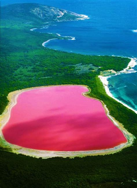 pink lake 25 best ideas about pink lake australia on pinterest