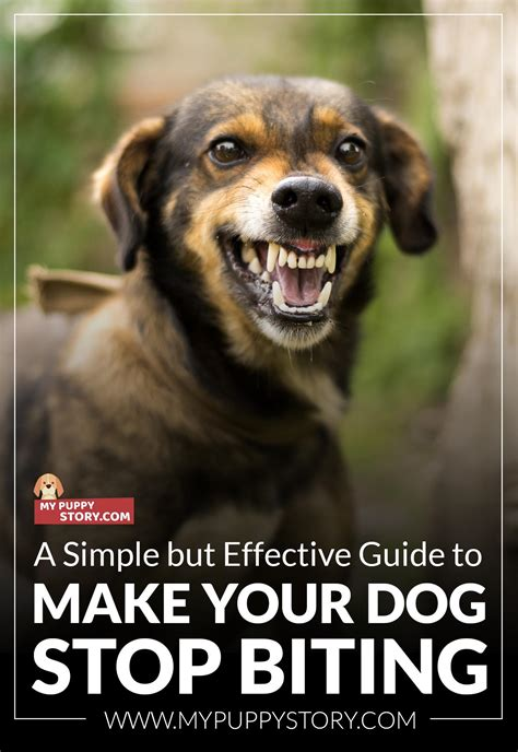 how to make your puppy stop biting a simple but effective guide to make your stop biting my puppy story