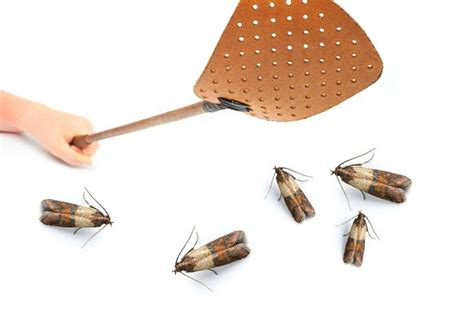 Keep Moths Out Of Pantry by 17 Best Ideas About Pantry Moths On Clean