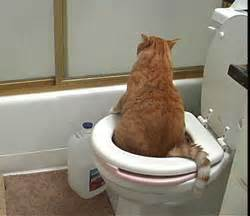 Cat Keeps Pooping In Bathtub by How To Toilet Your Cat Clicker Style Pryor