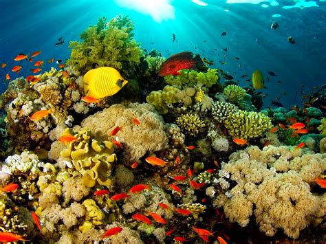 Ocean Fauna Under Water Coral Reefs With Beautiful Coral ...