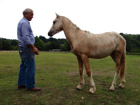 welsh section d colt for sale 1yr old welsh section d x c colt southton hshire