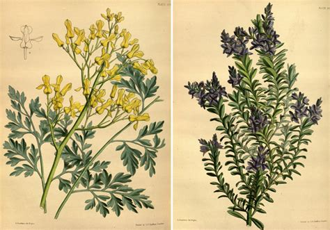 printable garden images remodelaholic 25 free printable vintage floral images