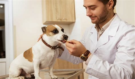 food recipe vet recommended which treats do veterinarians recommend and why
