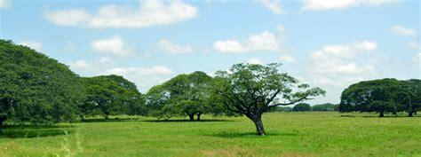 imagenes de paisajes llaneros las mejores im 225 genes de apure un lugar asombroso lleno de