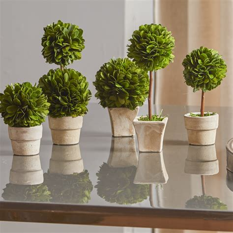 napa home garden preserved greens mini 5 topiary