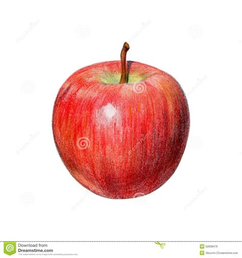 colored apples apple with colored pencils stock vector