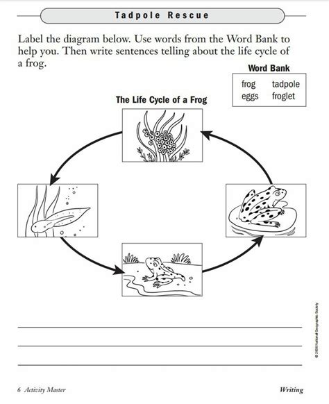 Cycle Of A Frog Worksheet by Pin By Petrone On Summer