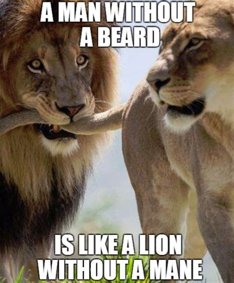 Lion Meme - top 60 best funny beard memes bearded humor and quotes