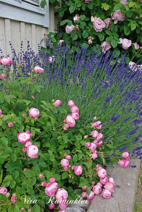 Roses And Lavender Garden Ideas Pinterest Gardens Lavender Garden Ideas