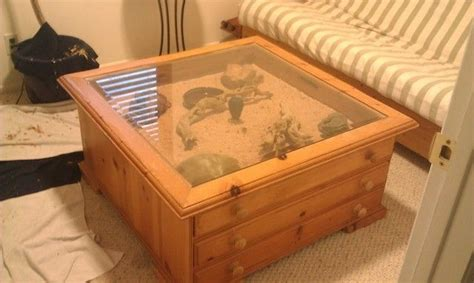 coffee table terrarium leopard gecko s for sale in