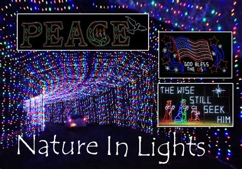 Nature In Lights by Nature In Lights Blora