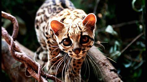 imagenes realistas de animales animales mexicanos youtube