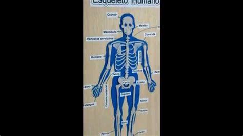 como hacer una maqueta del esqueleto humano maqueta escolar esqueleto humano youtube