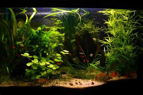 Mon Aquarium 54l Communautaire Mon Aquarium De 60 Litres