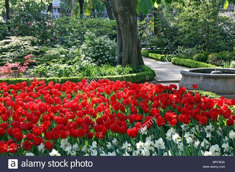 Botanical Gardens Madrid Tulips Flowering In The Royal Botanical Gardens Madrid Spain Stock Photo Royalty Free Image