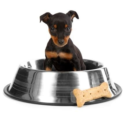 Adding Water To Puppy Food - choosing the best puppy foods