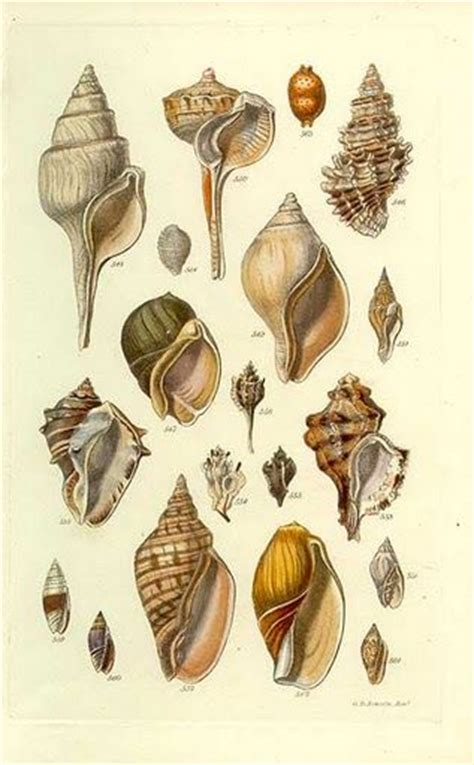 the 25 best seashell drawings ideas on pinterest sea