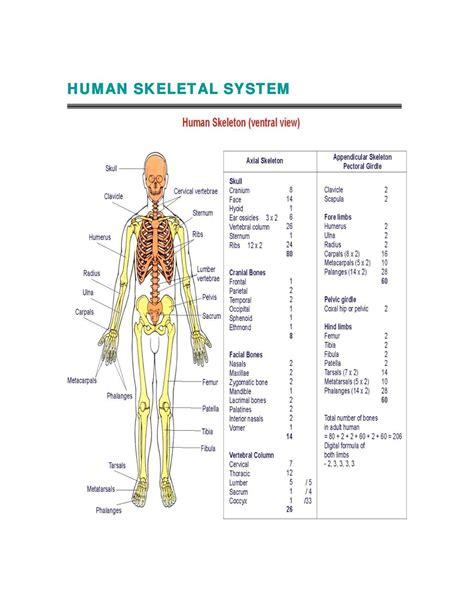human bone diagram human skeletal system diagram coordstudenti