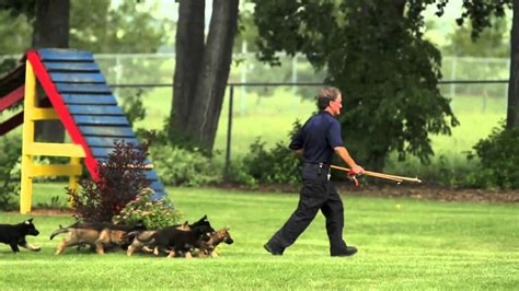 how are k9 dogs trained a demonstration of