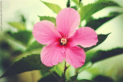 gambar gambar bunga lengkap