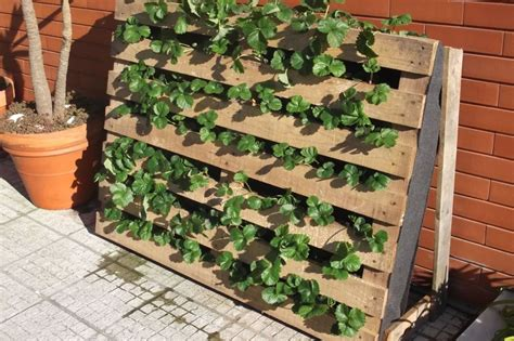 Strawberry Garden Ideas Pallet Used As Strawberries Garden 1001 Gardens