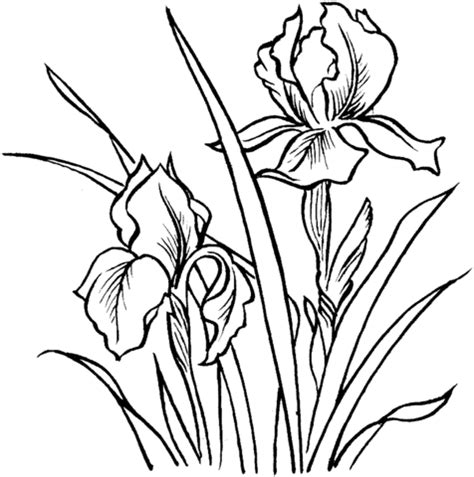coloring pictures of iris flowers lolirock iris coloring coloring pages