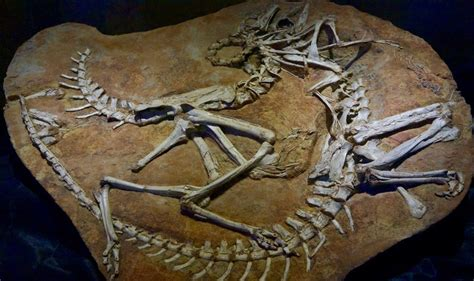 Fossil Second the second of mongolian fossils the atlantic