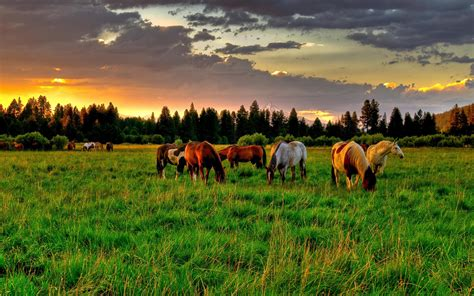 in the summer herd of horses in the summer wallpapers and images