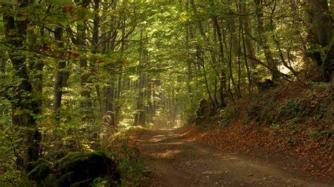 imagenes de bosques increibles m 225 s fotos hd de bosques fondos de paisajes