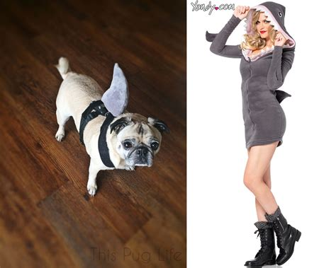 best pug costume who wore it best pug costumes vs costumes this pug