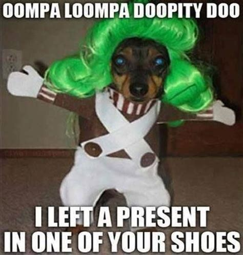 Oompa Loompa Meme - oompa loompa dog meme poopbuddy dog is funny