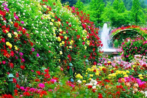 imagenes de jardines de rosas de colores dise 241 o de jard 237 n exhibiendo la elegancia de la naturaleza